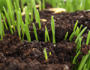 Grass-Growing-Thinkstock