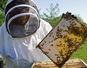 beekeeping-istock-2015
