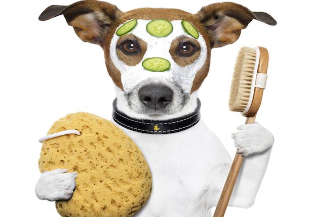 damedeeso wellness spa wash sponge dog