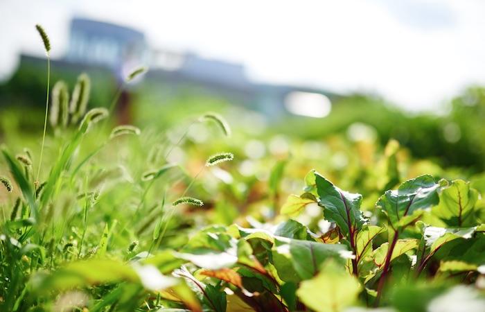 Green-farm