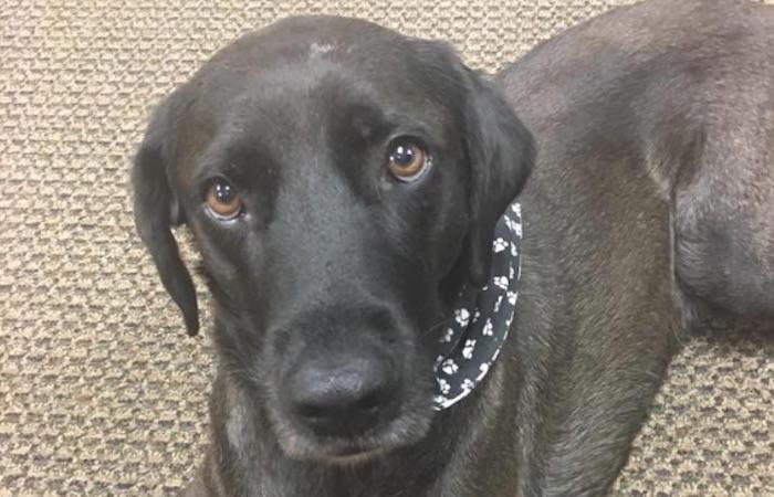 Jake-the-DA-dog