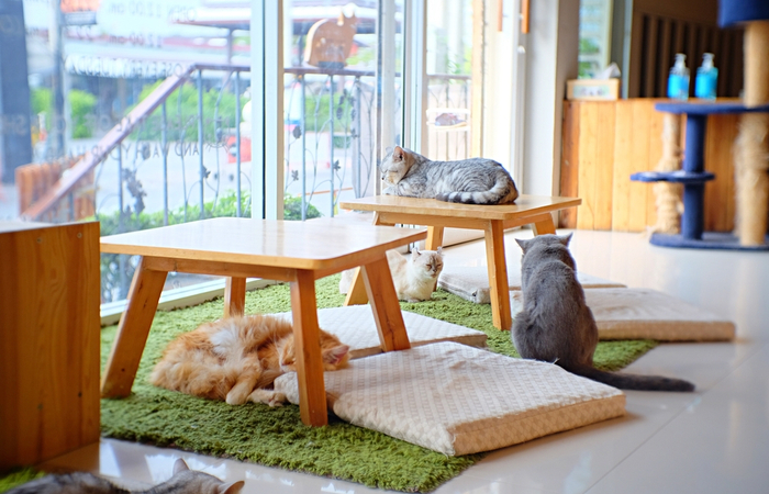 Cat cafe in Thailand reopens after Covid-19 lockdown