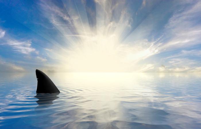 USDirect seeks binge watcher to review Shark Week 2020