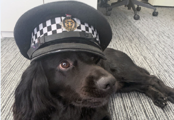 Sussex Police Force de-stress with wellbeing dogs